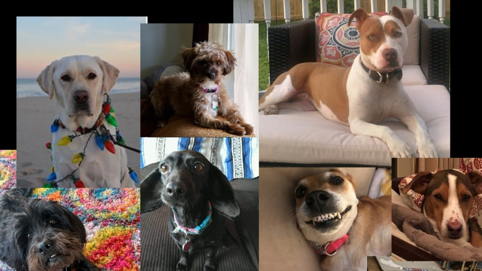 Photo of Kaptivate staff dogs